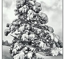 SNOWY TREE by joan manel zamora