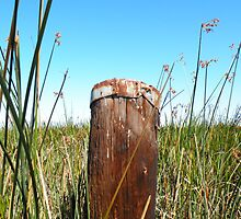 The Lonely Old Post in the Wetlands by Martha Sherman