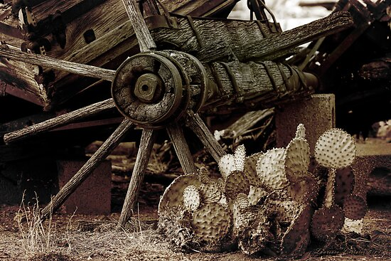 Nopal and Wagon Wheel 087 by Larry3