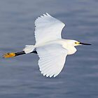 Snowy Egret in flight by jozi1
