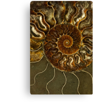 An Ancient Treasure V Canvas Print
