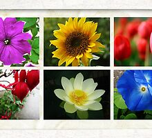 Flower Collage by Angiefire