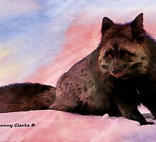 Fabulous Foxes:  Black Sheep of the Family by Bunny Clarke