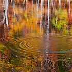 Water Reflection - Sweet Water Creek by Evelyn Laeschke
