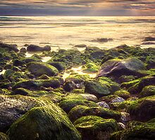 Gold n Green by MiVisions