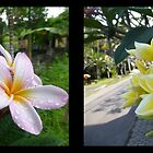 Frangipani Duo in Bali by Keith Richardson