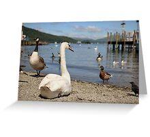 Lake Swan Greeting Card