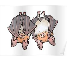 Greater mouse-eared bats Poster