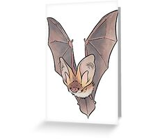 Grey long-eared bat Greeting Card