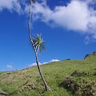 Lone Tree on Busby Head, Whangarei by lezvee