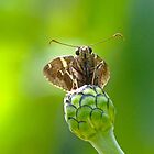 Little Skipper by Susan S. Kline
