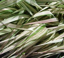 Ribbon Grass by Mary Ellen Tuite Photography