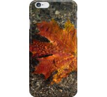 Maple Leaf - Playful Sunlight Patterns iPhone Case/Skin
