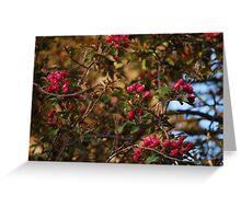 Pink Tree Flowers Greeting Card