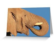Elephant - Thirst and Pleasure - African Wildlife Background Greeting Card
