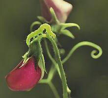 Green Jelly by JBlaminsky