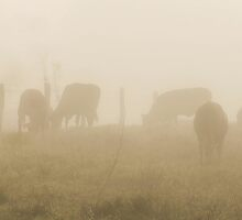 Cows in the Mist by kjmphotography