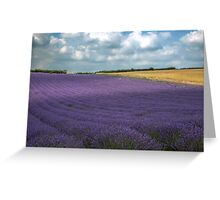 A field of lavender on a sunny day Greeting Card