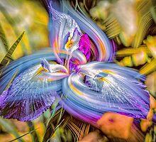 Dance of the Iris by Wib Dawson
