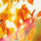 Autumn Blaze by Linda Lees