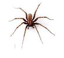 Scary Spider Photographic Print