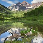 Maroon Bells Images - Canada Geese on a Summer Morning in Colorado by RobGreebonPhoto