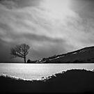 Winter light by Dan Shalloe