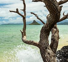 Chinaman's Hat 4 by Leigh Anne Meeks