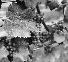 Grape Leaf by AGODIPhoto