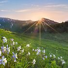 Colorado Wildflower Landscapes - Columbine near Mount Bellevue, Crested Butte by RobGreebonPhoto