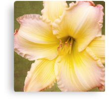 Big Yellow with the Pink Fringe  Canvas Print