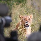 Queen-sized Lens Envy by Owed to Nature