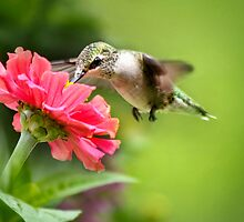 Botanical Hummingbird by Christina Rollo