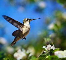 Beautiful Hummingbird in Flight by Christina Rollo