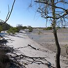 A Walk along the Mudflats. Tin Can Bay. Queensland. by Rita Blom