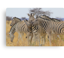 Zebra - African Wildlife Background - Love to Feel Canvas Print