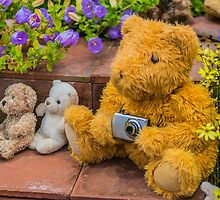 Teddy Bear Family Photo by Alec Owen-Evans