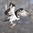 Osprey and Walleye by Skye Ryan-Evans
