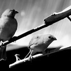 Black&White birds by fita