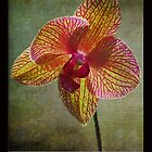 Kaleidoscope Orchid Card by GalleryThree