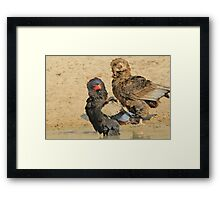 Bateleur Eagle - African Wildlife - Animal Parents Framed Print