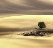 Lonely tree by JBlaminsky