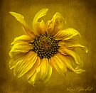 Sunflower by © Kira Bodensted