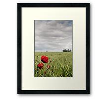 Poppies in a Norfolk field Framed Print
