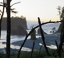 Bent Trees along Beautiful Ruby Beach by jkmarshall