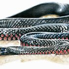 Red Belly Black Snake by Rebecca Koller