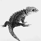 Red eyed crocodile skink by Rebecca Koller