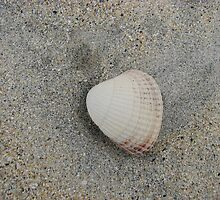 Solitary Shell on a Scottish Shore by BlueMoonRose