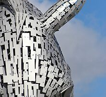 Close up of a Kelpie by John Messingham