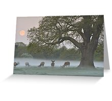 Full Moon - Bushy Park, London Greeting Card